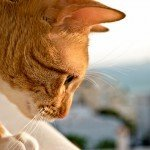 ginger cat looking down photo