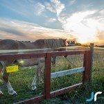 Finish horse during sunset photo