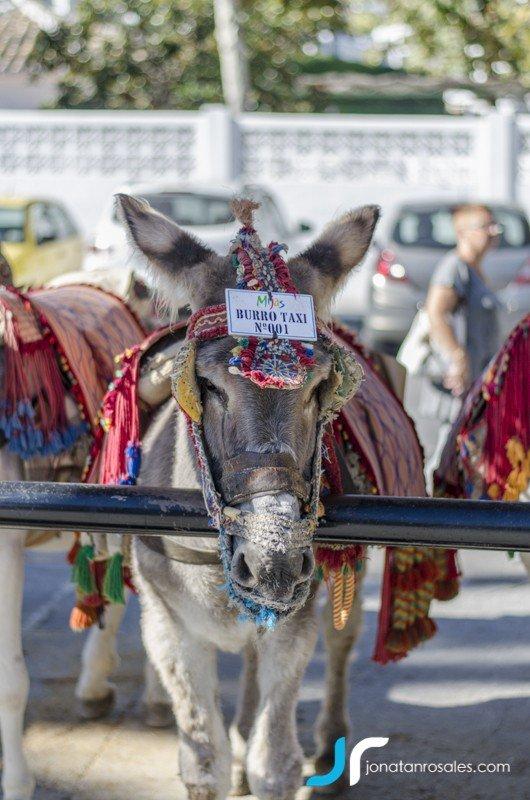 Donkey Mijas