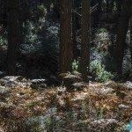 Forest Refugio de Juanar
