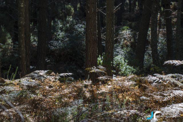 Forest in Refugio de Juanar