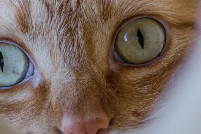 close look ginger cat